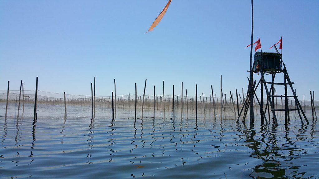 shrimp-farm
